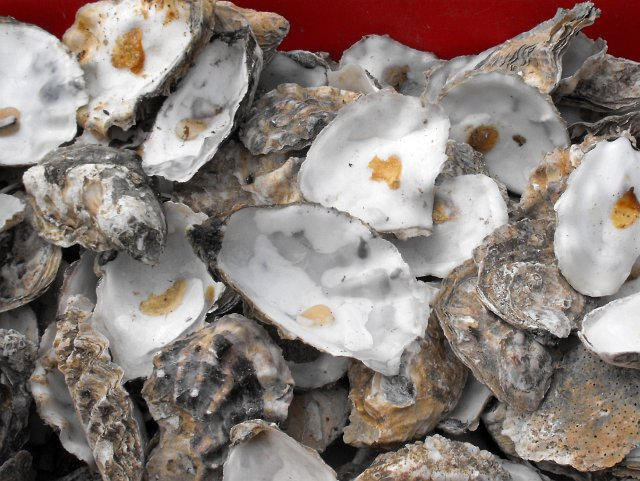 Empty_oyster_shells,_Whitstable_-_geograph.org.uk_-_1364068