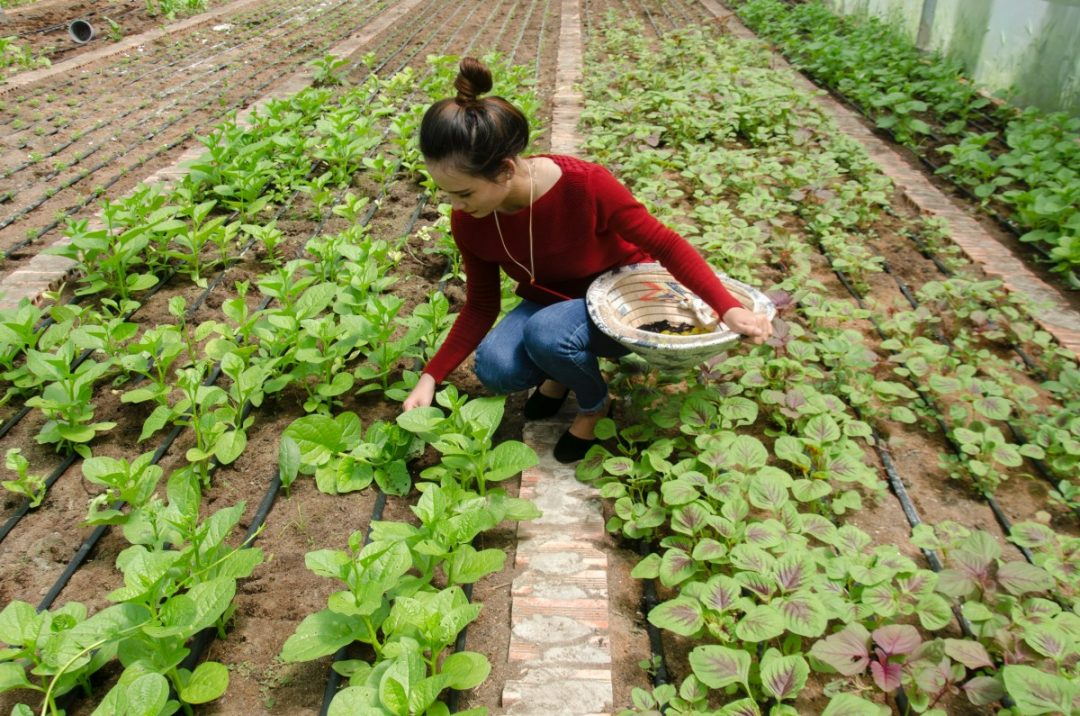 A young woman tends to a row of plants.